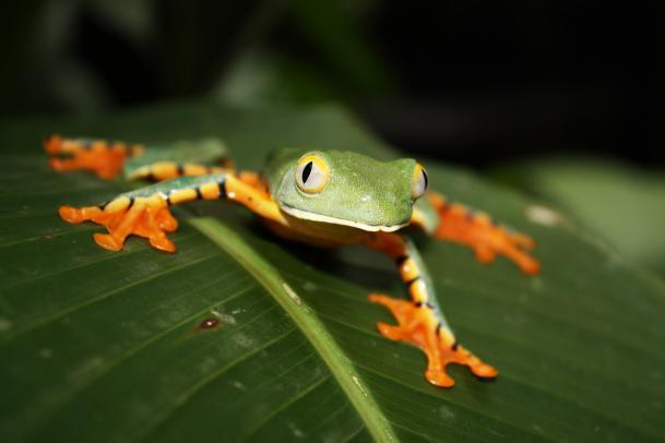 Costa Rica Pur