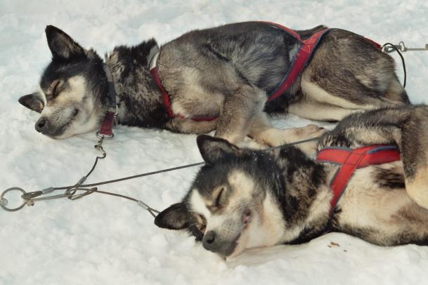 Hundeschlittentour 2 Tage