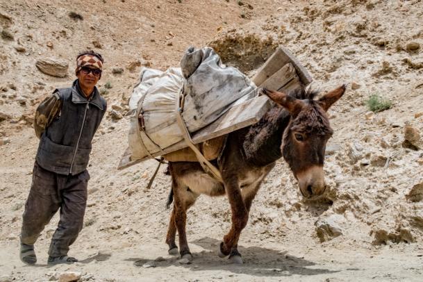 Ladakh - Trekking & Bergsteigen
