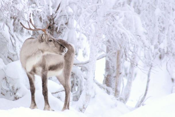Winterabenteuer in Ruka